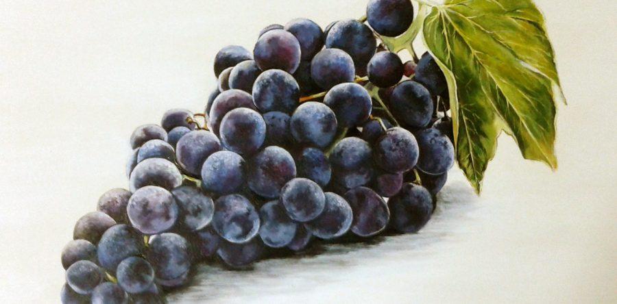 Meyve Çalışması